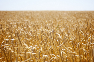 IFC to Provide up to $100M to Ukraine's Largest Grain Trader