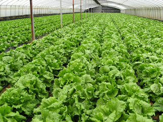 Organic Agriculture Seeing Growth as Traditional Farming Faces Continued Challenges