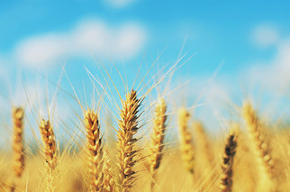 $7M Investment from Bushel Boosts Digital Platform for Grain Industry