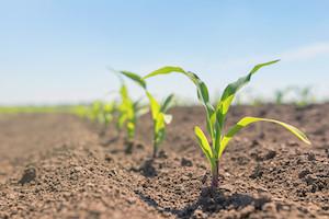 USDA Announces Final Biotechnology Regulation Update