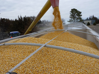 COVID-19, Economic Conditions Causing Significant Cuts to Corn Buying