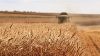 U.S. Grain Council Stance on NAFTA Negotiations