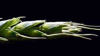 Tight Grain Margins Lead ADM to Restructure