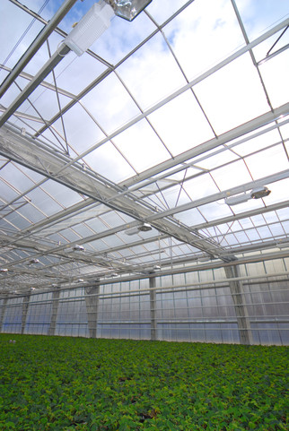 Monsanto to Establish Corn Germplasm Greenhouse Facility in Arizona
