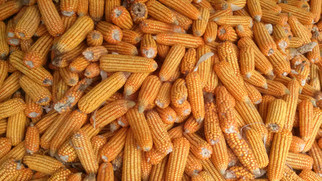 China, Mexico Purchases of U.S. Corn Pushing Prices to Levels Not Seen Since 2013
