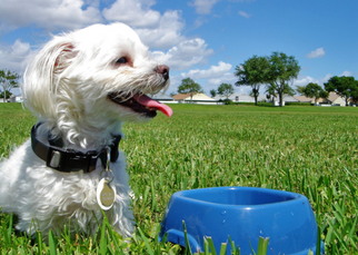 General Mills reshapes its portfolio with pet food acquisition