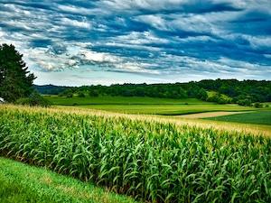 Despite Soy Rally, U.S. Farmers Aiming For Massive Corn Acreage