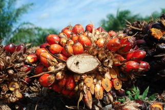 Indonesian Demand for Palm Oil to Grow by 70 Percent by 2020