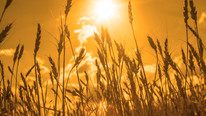 Western Australia Grain Handler Collapses