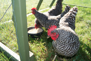 $55 Million Poultry Feed Mill Opens in Alabama