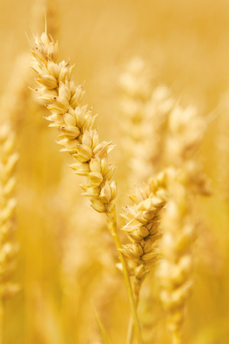 COFCO Aims to Double Black Sea Grain Purchases Within Three Years
