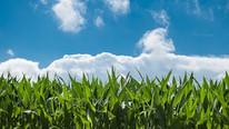 U.S. Closing Organic Gap; Reliance on Organic Corn Imports May End Within Decade
