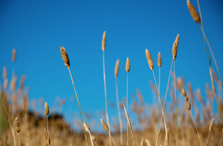 Pacific Ethanol Refinances Debt, Acquires Nebraska Grain Elevator