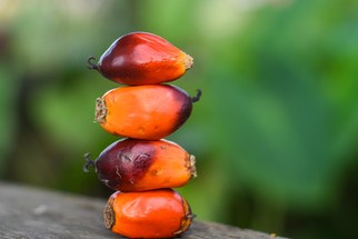 Cargill is Building a $200M Sustainable Palm Oil Refinery in Indonesia