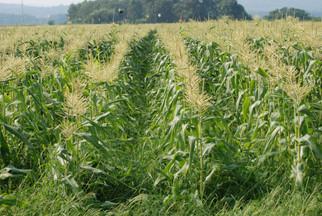 ADM to Expand Capacity at Turkish, Bulgarian Corn Facilities
