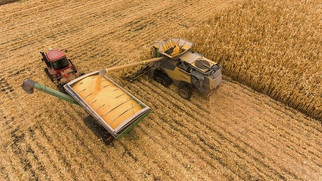 USDA Predicts Highest Corn, Soybean Prices in Seven Years