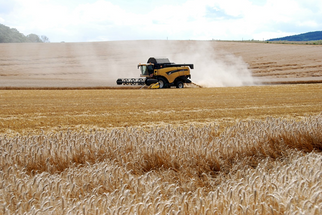 Australian Grain Production Hit Hard After Winter of Drought