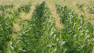 Pacific Ethanol Acquires Illinois Corn Processing