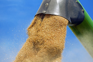 NGFA and NAEGA in Favor of Senate Reauthorization of U.S. Grain Standards Reauthorization Act