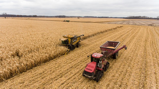 U.S. Secures Record Corn Export Orders, But Shipments Not Keeping Pace