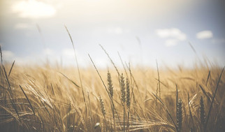 Indigo Ag Raises $250M, Launches Innovative Grain Marketing Platform