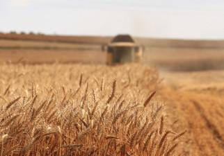 MARS Raises Its EU Grain Yield Forecast For Second Month