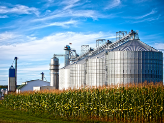 More Than Half of U.S. Grain Bought by FTA Partners