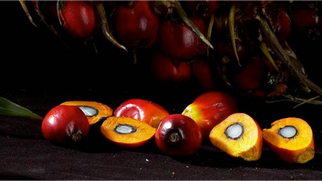 Cargill Cuts Ties With Guatemalan Palm Oil Supplier Over Lack of Sustainability