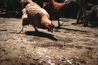 Sourcing Adequate Feed Ingredients Remains a Challenge