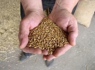 EU Commission Investigating Bayer-Monsanto Deal