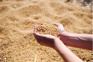 Executive Profile: John Lumpe, CEO, Illinois Soybean Association