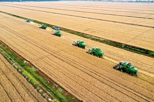 New Wheat Variety Has Potential to Strengthen Global Food Security