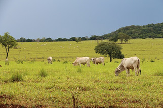&Green Fund Commits $10M to Grupo Roncador for Cattle, Soy, and Corn Production in Mato Grosso