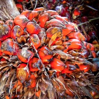 Malaysia's Palm Oil Stocks Surge