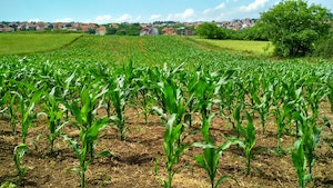 EU Corn Output On Pace to Compete With U.S. Production