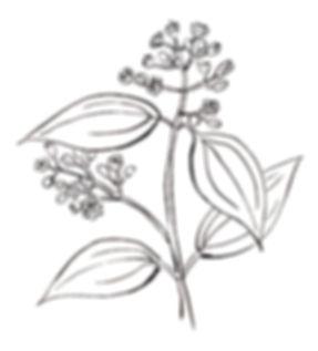 線画,お洒落な線画,植物のイラスト,お洒落なパッケージ,桂皮,