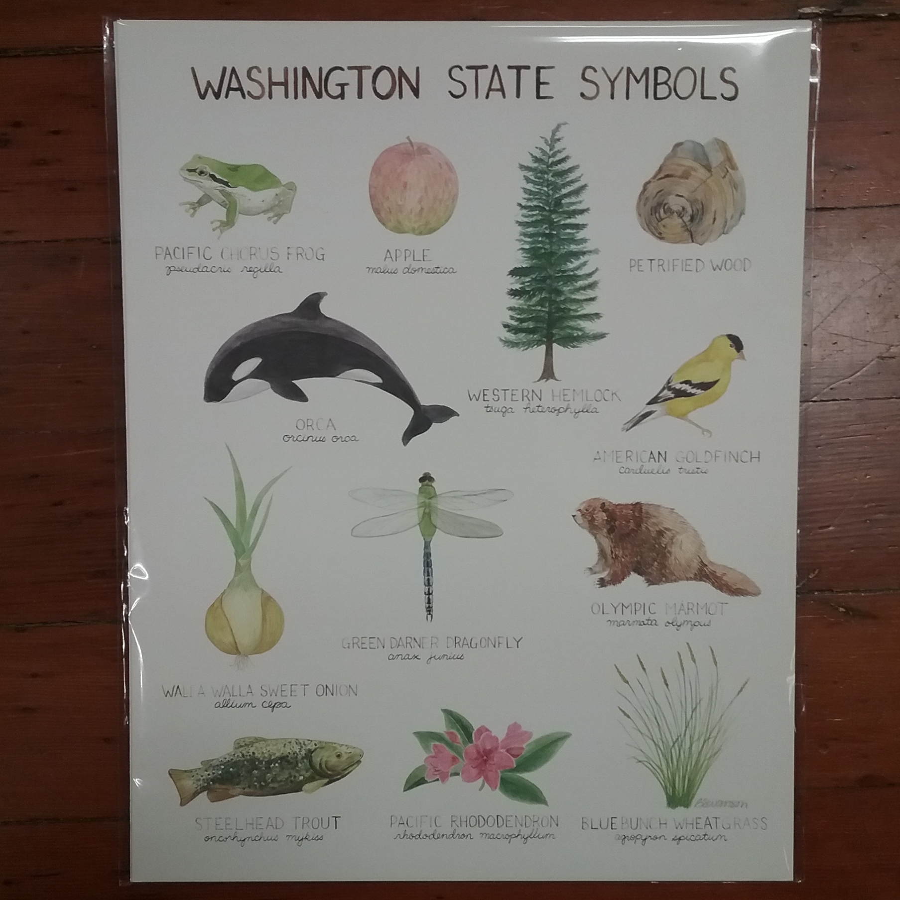 Washington State Symbols Print