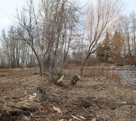 This photo shows very little elevation change between the bank and low water levels. The property owner clearcut vegetation that otherwise helps the land absorb and move water in the event of the flood.