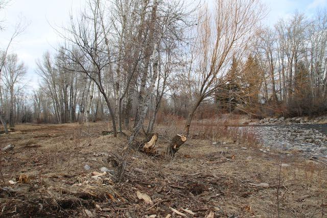 trees cut below the high water mark