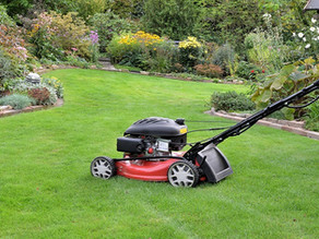 Focus On Your Lawn Now