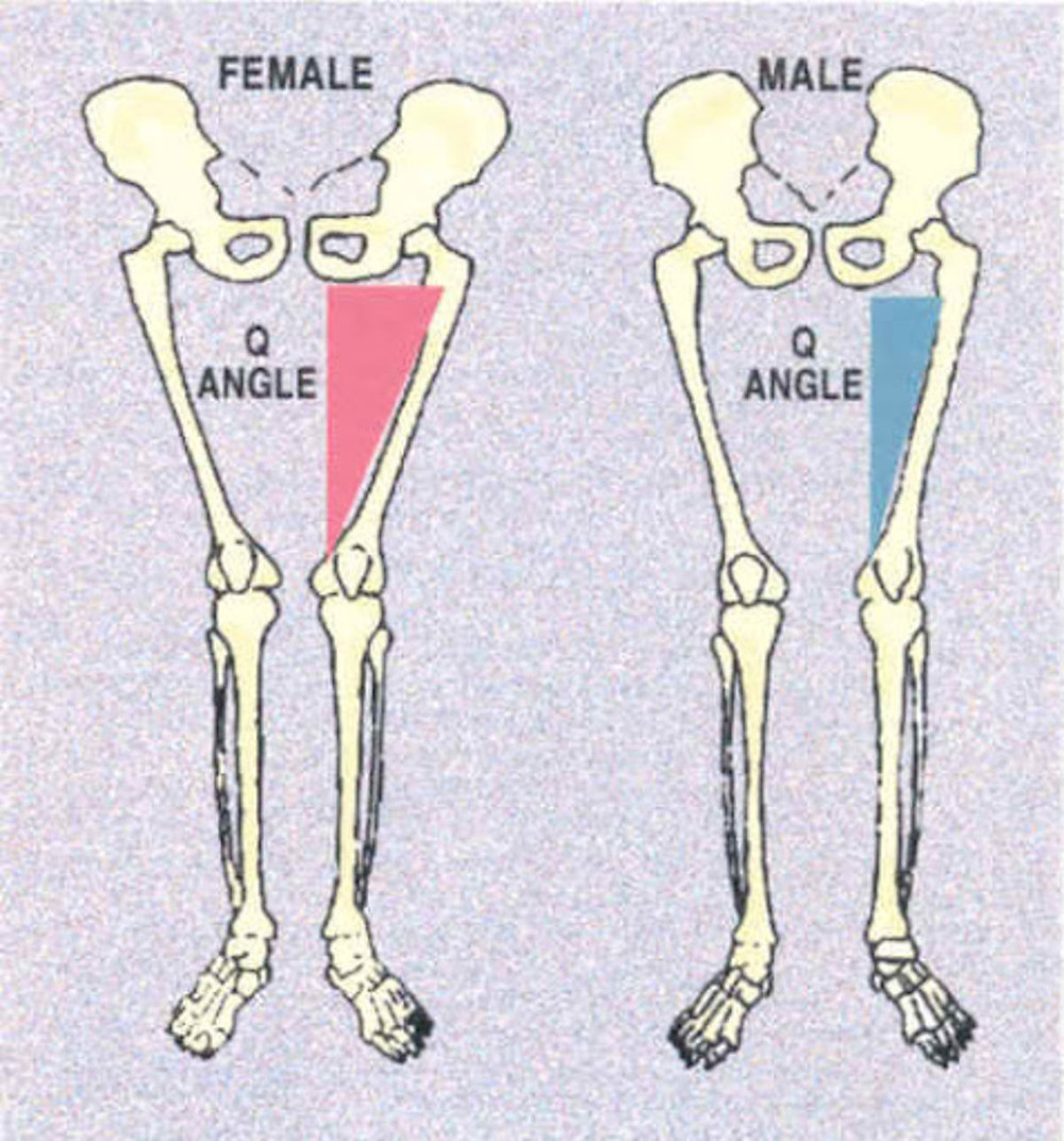 differences in male and female bone structure