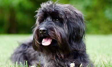 Lara Tal Cohn of NOVA's For Pup's Sake is a Fairfax, VA dog trainer.