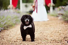 Coalby the dog attends a wedding a the Mark Addy Inn.
