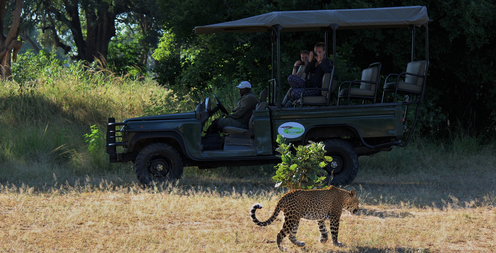 Leopard and Game Drive