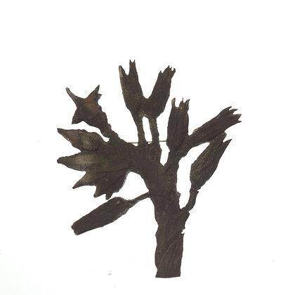 Trichodesma zeylanicum Brooch