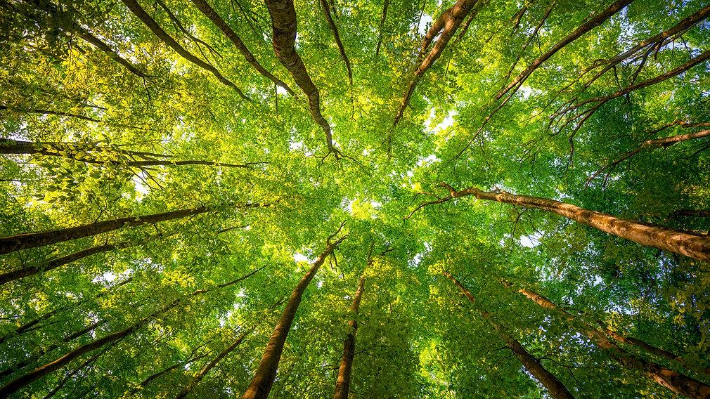 trees-3840x2160-5k-4k-wallpaper-8k-sunli