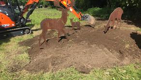 Latest deer update: