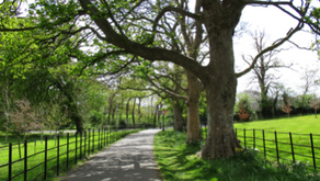 National Tree Week – 21st to 27th March