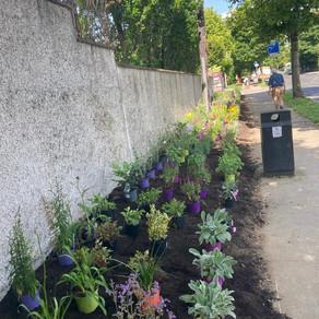 New pollinator-friendly flower bed