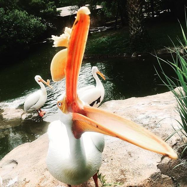 Fun day at the zoo!  #caldwellzoo #stork
